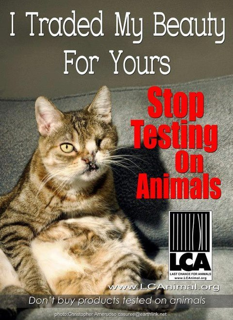 should animal experimentation ever be permitted essay Animal rights essay for ielts: learn how to write an essay where you have to discuss two opinions people who believe in animal rights think that they should not be treated cruelly, for example in experiments or for sport.